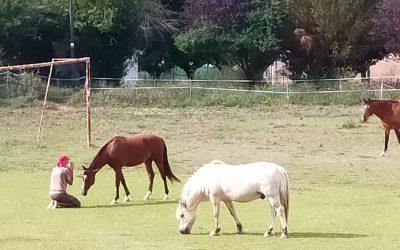 Creactivación con caballos